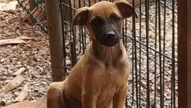 Cachorrinhos estão disponíveis para doação em Toledo