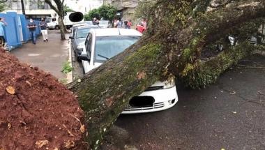 Vento de mais de 56 km/h atinge Apucarana e causa estragos
