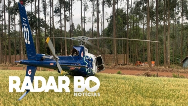 Homem fica ferido após ser atingido por árvore no interior de Guaraniaçu